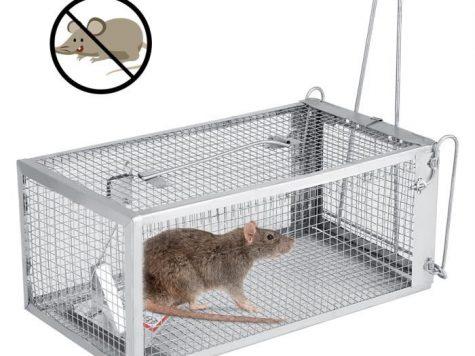 Piège à souris : conseils pour faire un choix fûté photo 3